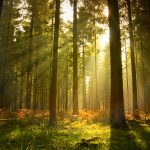 Importance of forest - Essay, Article, Speech, Paragraph